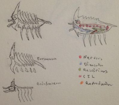 Decapede Anatomy by TheDerpasaur
