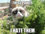 Grumpy Cat Meme 6 by jinxxnixx