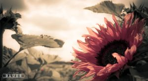 Sunflower by The-BluB