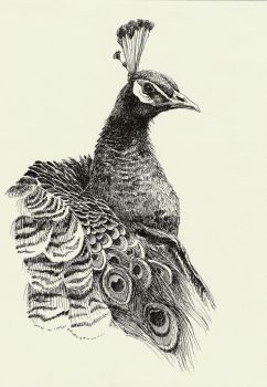 peacock by lidia-art