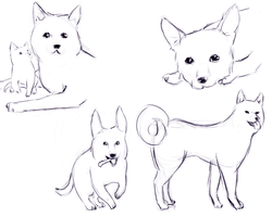 Dogs Sketches by nikkeae