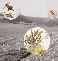 Collage 2012 117 by ArianeJurquet