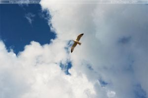 Flying high by neodium