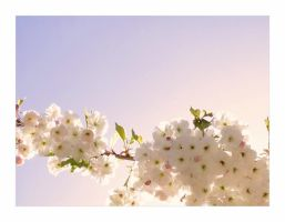 Blossom by sannel