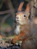 Squirrel 215 by Cundrie-la-Surziere