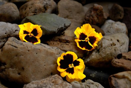Stones and Flowers by hippofantus
