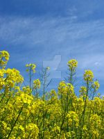 Yellow and blue by bastet78