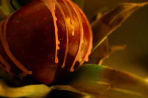 Melted Applepine Revisited by DrivenSphere