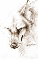 Scars.. by RavenMadwolf