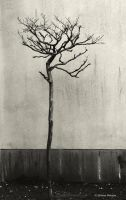 Just a tree by lpetrusa