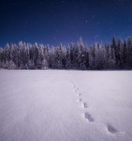Tracks In The Moonlight by Nitrok