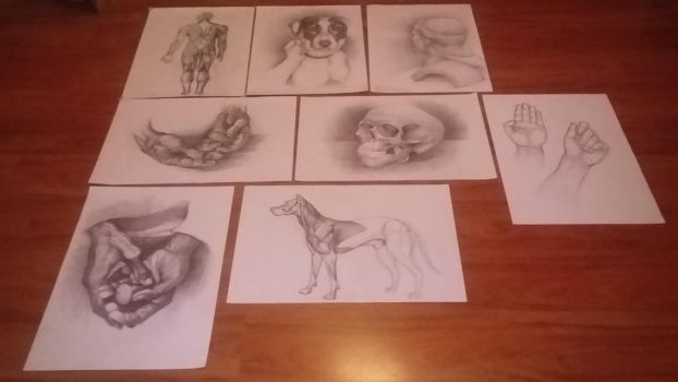 Favorite drawings by SzollosiAnna