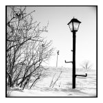 2015-075 Lamppost by pearwood