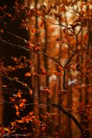 fall colors - 7 by mystic-darkness