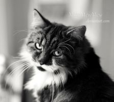 I see you by MadamMewMew