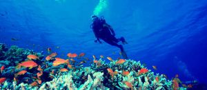 Learn to Dive from Lets Go Adventures by letsgoadventures