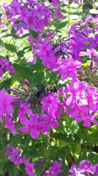 Busy Busy Bee 2 by wildfire4u2