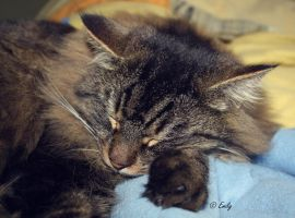 Tired . by au-bout-de-mes-reves