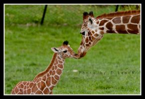 A Momma's Love by tleach0608