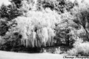 Pinhole IR Photography 2 by Okavanga