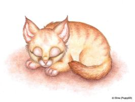 Sleeping kitten by Puppy93