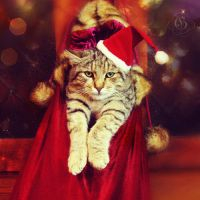 ::Merry Christmas to all:: by blondepassion