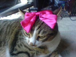 my cat and his pink bow 6 by Livii-Chann