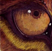Eye of the Lion by Spiritwings