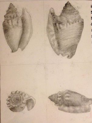College Drawing I class: Sea Shells 1 by RealityMisfit