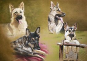 4 GERMAN SHEPHERDS COMM. by DIXIEDEAN