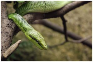 Sneaky by DysfunctionalKid