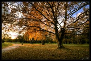 Yellow Season by Jurnov