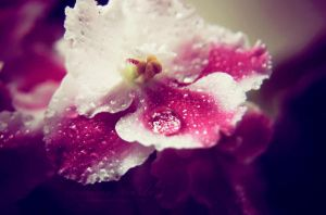 Pink Shine by MiaLeePhotography