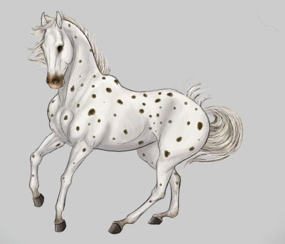 Dressage in Spots by vixentheangryfox