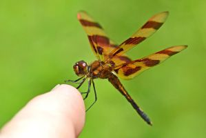 Male Halloween Pennant by wreckingball34