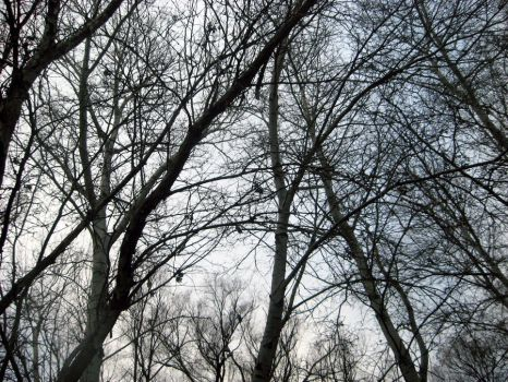 Trees by MissEnigmatic