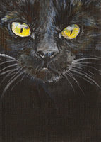 aceo black cat by kailavmp