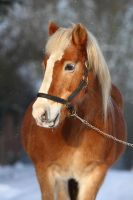 Dorritt in the snow by MissToseland
