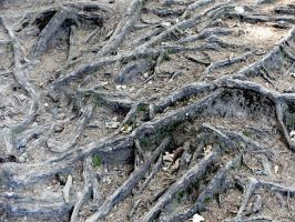 wood roots 1 by deepest-stock
