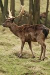 Deer Stock 13 by Malleni-Stock