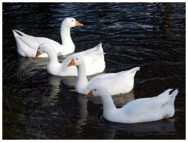 geese by DasGloy