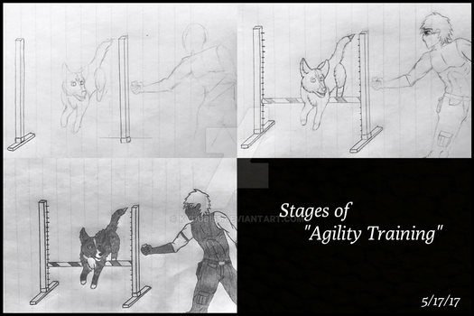 Stages of Agility Training by Kyuubi55