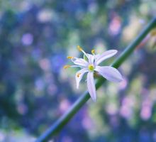 blue bokeh by Iridescent-happinesS