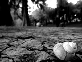 Shell on a dry land by AnaPengu