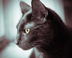 Black Cat and Window by kablaha
