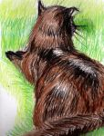 My Cat at Rest by philippeL