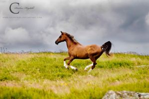 Over the Moor by Colourize