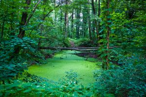 Green World by freaky-x
