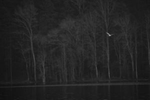 Solo Seagull by JeremyC-Photography