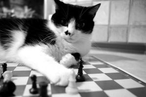 Checkmate by Rotschweif